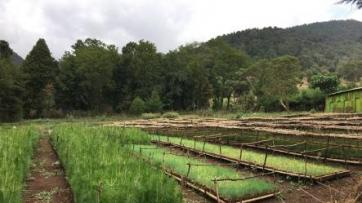 Communities manage Ethiopia's forests